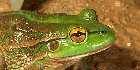 Frog Census Evening - Introductory walk and talk tickets