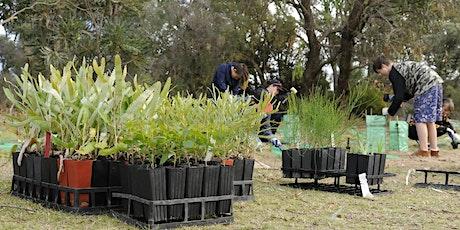 Community Planting Day - Homestead Park, off Wellard Road, Wellard tickets