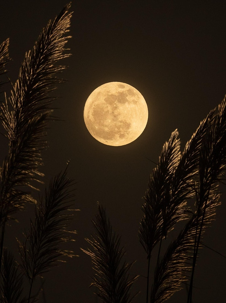 Full Moon Breathwork and Cacao Ceremony image