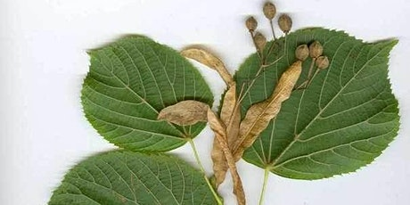 Leaf Identification Workshops tickets