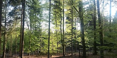 Kraftort Wald - mit Übernachtung Tickets
