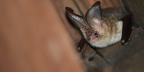 Evening Bat Walk tickets