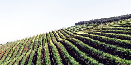 Italiensk vinprovning Online   Den 26 April tickets