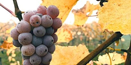 Vinprovning med naturvin Online   Den 28 April tickets