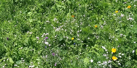 Wild Plants of Holland Park tickets