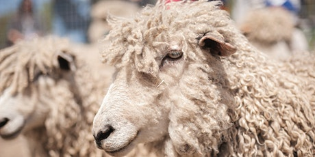 Sheep Shearing Special Admission Day tickets