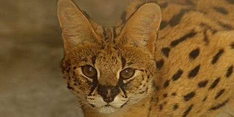 Colobus/Serval Exhibit Opening- Members Only Preview Night tickets