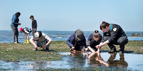 Junior Ranger Rockpool Ramble- Ricketts Point Marine Sanctuary tickets