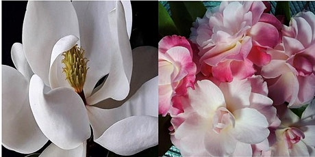 Tamborine Mountain Camellia and Magnolia Festival - Open Gardens Trail tickets