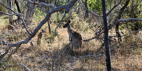 Guided walk in Aldinga Scrub Conservation Park tickets