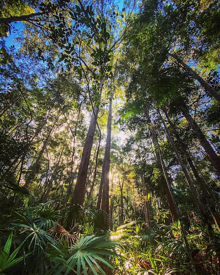 Forest Bathing Nature Walk image