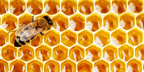 IAgrE Engineering for Food & Drink Seminar - Honey tickets