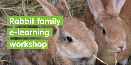 Rabbit e-learning Family Workshop tickets