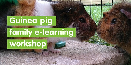 Guinea Pig e-learning Family Workshop - Self Led tickets