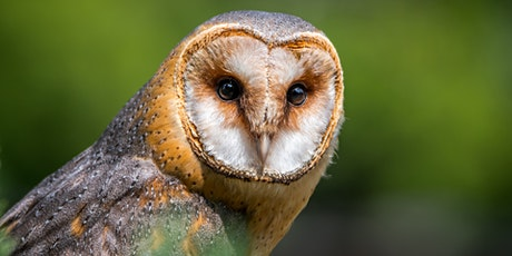 An introduction to British Owls tickets