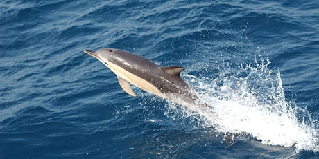 The Whales, Dolphins and Porpoise of Tor Bay re-run tickets