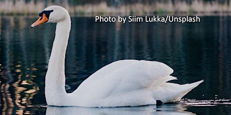 Mute Swan - Wildlife Series tickets