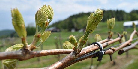 Celebrate Bud Break at Treasure Island Wines tickets