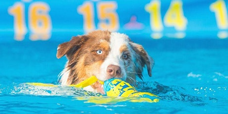 Dog Dock Diving with A Dog's Way Inlet Flyers tickets