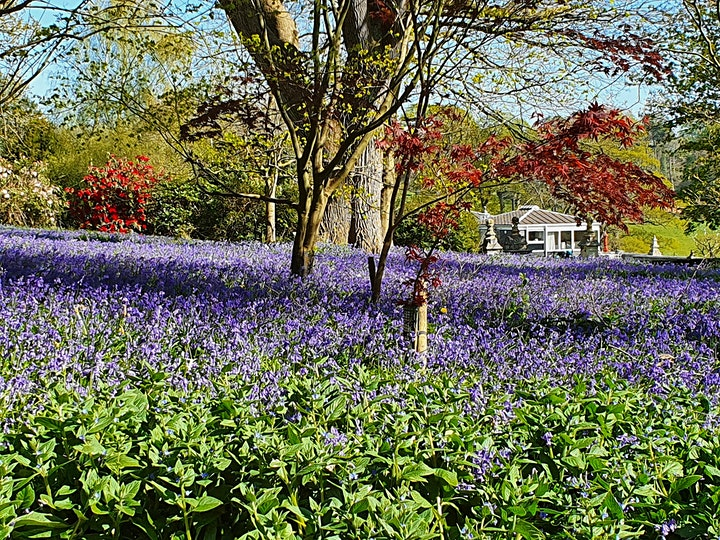 Shobrooke Park Gardens Open 16th April 2021 image