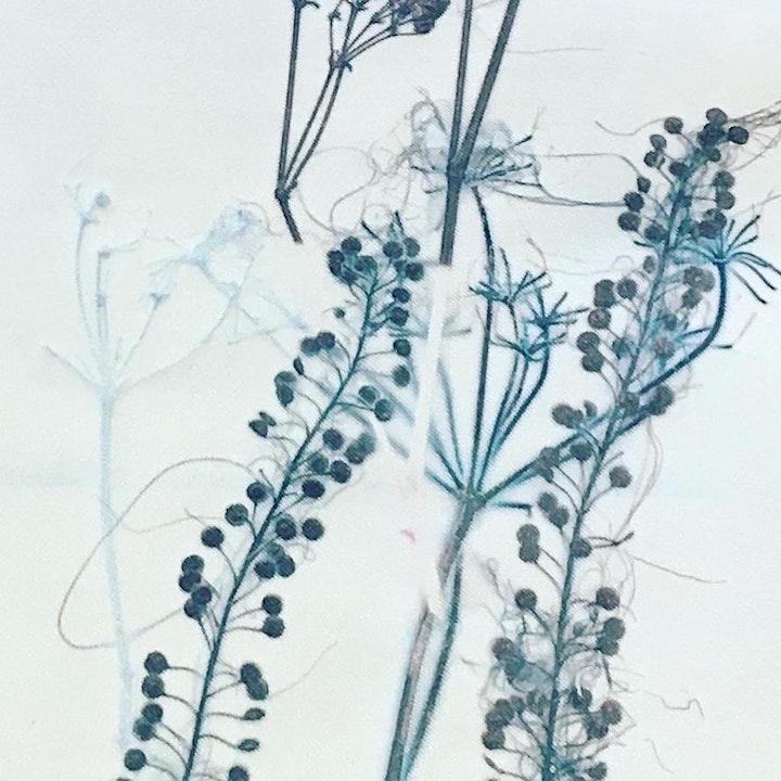 Printing with Plants image