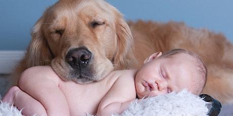 Online workshop: Hoe vertel ik mijn hond dat ik zwanger ben tickets