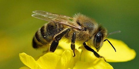 July - ONLINE Beekeeping Class -  Anatomy and Colony Dynamics tickets