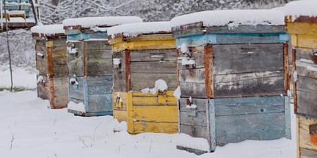 August - ONLINE Beekeeping - Prepping Honeybee Colonies for Winter tickets