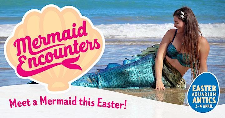 Mermaid Encounters! image