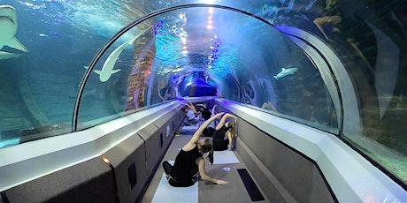 Yoga under the Sea-  SEA LIFE Annual Members tickets