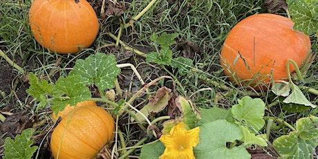 Fall Harvest Festival tickets