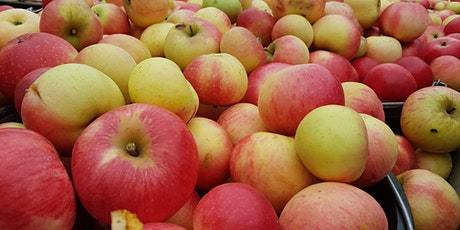 Apple Harvest Days in our Heritage Orchard near Cambridge. tickets