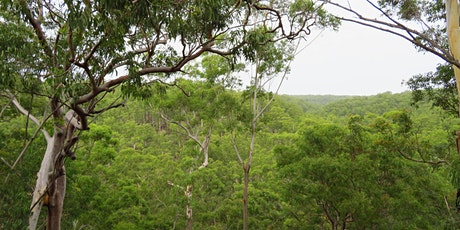 Bush Explorers - 'Autumn Almanac - Serenity Stroll' - Scattergood Reserve tickets