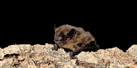 Autumn Bat Walk tickets