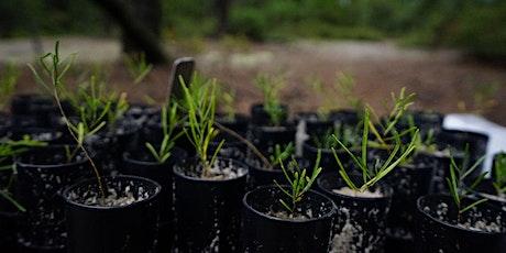 Webinar: Behind the Scenes - Rare Plants of NJ entradas
