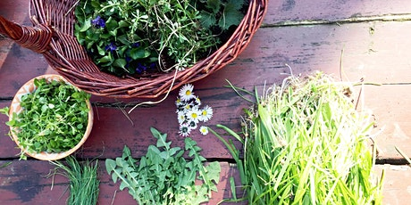 Spring Foraging - Edible Weeds & Forest Medicine tickets