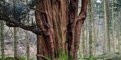 Recording Ancient & Veteran Trees in Powys & the Brecon Beacons tickets