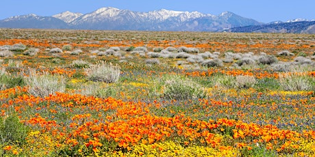 Beauty and the Beast: California Wildflowers and Climate Change | Book Talk tickets