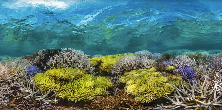 Earth Day Film: Chasing Coral image
