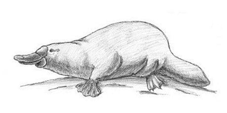 60min Animal Pencil Sketching Art Lesson - Platypus @1PM (Ages 7+) tickets