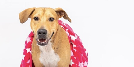 ArtSpace Sip & Squiggle 'Paint A Pooch' for Peggy's Promise Dog Rescue tickets