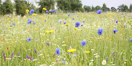Introduction to Wildflower Arranging tickets