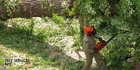 Free consultation about tree services tickets