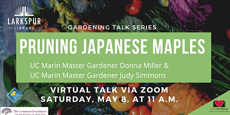Pruning Japanese Maples with UC  Marin Master Gardeners tickets