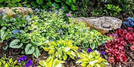 Garden Bed Design for Beginners- Webinar tickets