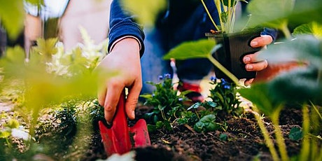 Grow your own veg program afternoon sessions tickets