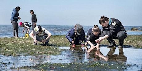 Junior Ranger Beach Combing - Barwon Bluff Marine Sanctuary tickets
