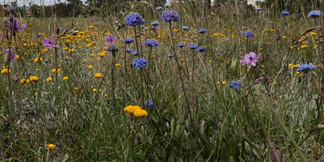 Blossoming Bees and Butterflies - Gardens for Wildlife Launch tickets