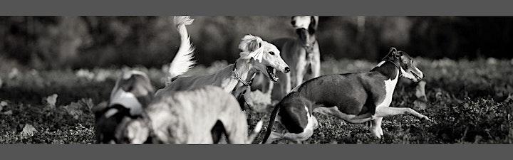 """Praxis Tages-Seminar """"Windhunde verstehen"""" Teil 5  Präsenz oder online: Bild"""