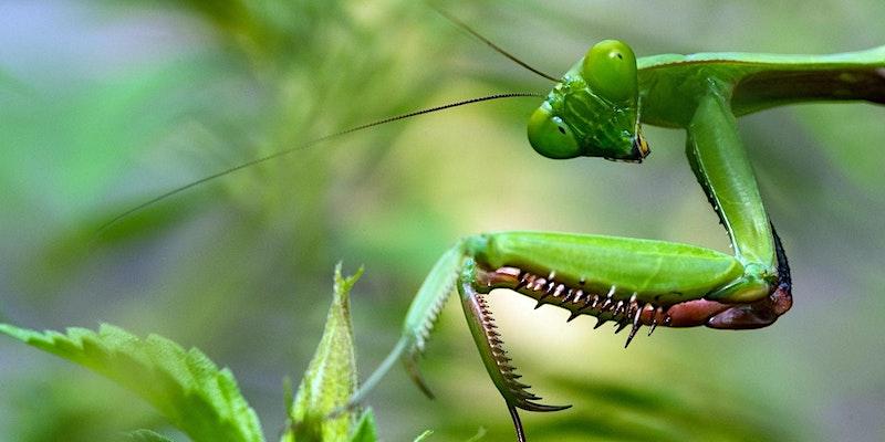 Webinar: Bug Bash